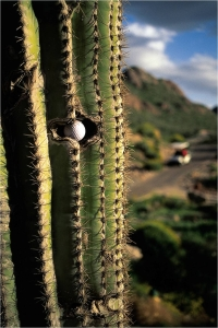 ball in cactus