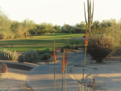 Thirteen features fairway guarded by giant Saguaro cactus